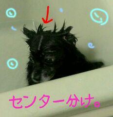 CACXX46M.jpg