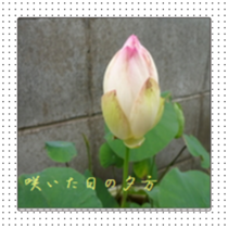 20140706170604a42.png