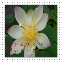 201407061708038a5.png