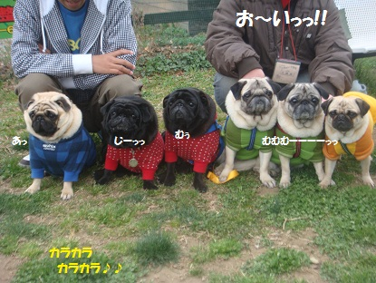 DSC00775_2014050616570815d.jpg