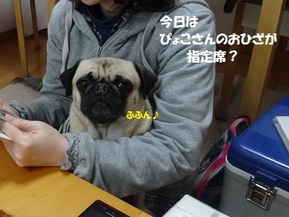 DSC01051_20140409224527d60.jpg