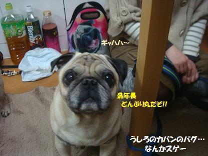 DSC07248_20140215005314780.jpg