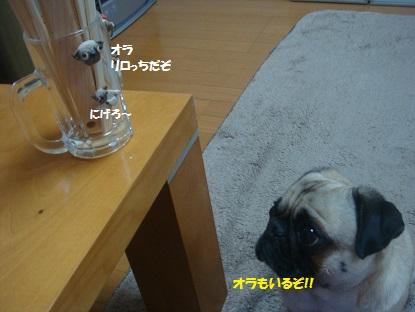 DSC07639_20140215201356ce7.jpg
