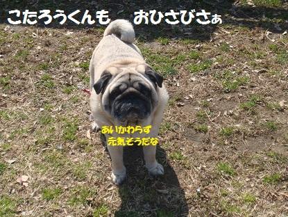 DSC08421.jpg