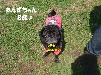 DSC08433_20140318044031c8e.jpg