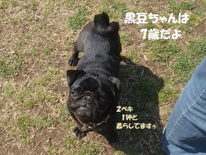 DSC08460_201403180458180a9.jpg