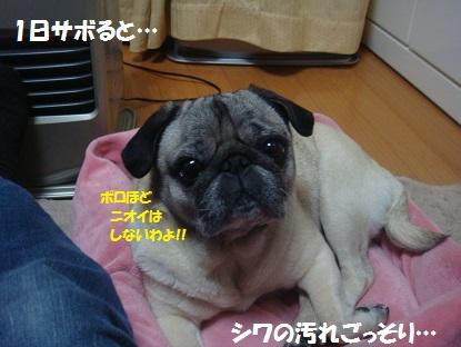 DSC08488.jpg