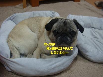 DSC08530_20140326205936040.jpg