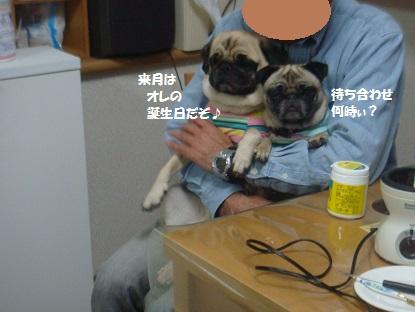 DSC08660_201404010355532aa.jpg