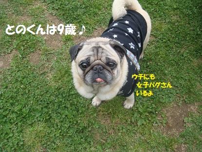DSC08722_20140514021852fd9.jpg