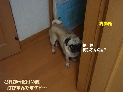 DSC08847_20140501041612a9c.jpg