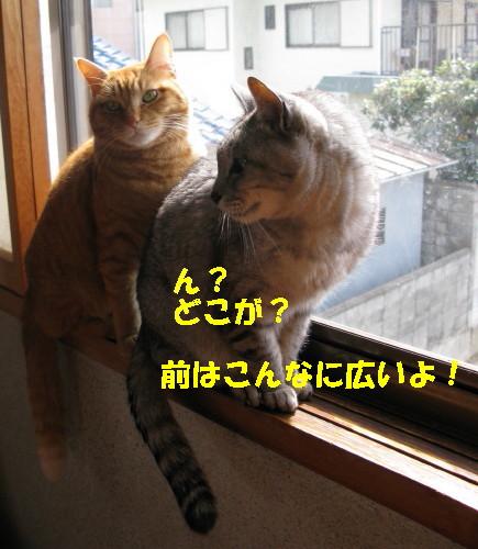 booako_201402231145.jpg