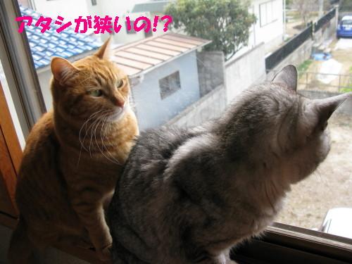 booako_201402231146.jpg