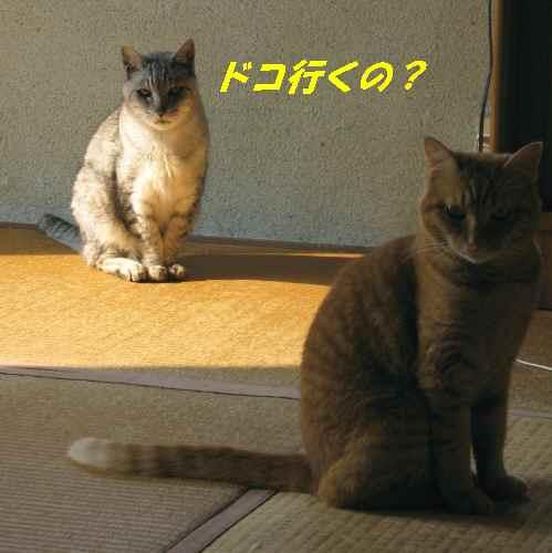 booako_20140722.jpg
