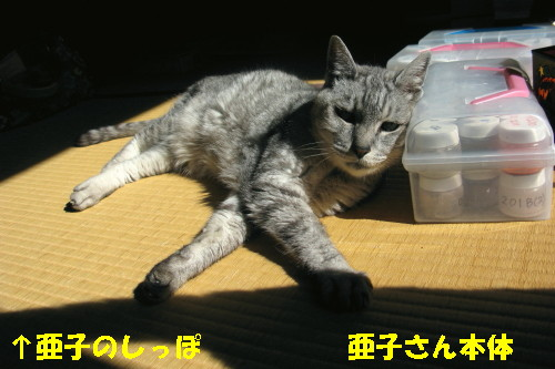 booako_20140830.jpg
