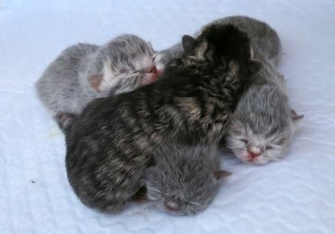 4)左から あたるちゃん、百合音ちゃん、くれ太くん、鞠音ちゃん