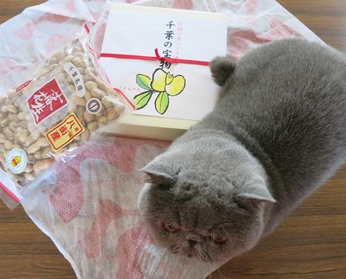 15)千葉の宝物♡
