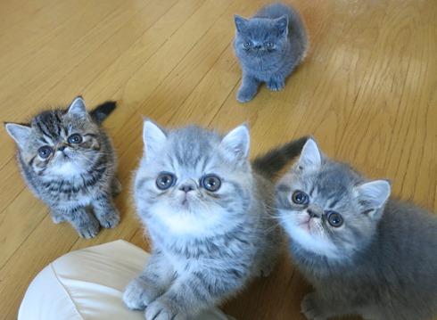 1)かわいい4兄妹