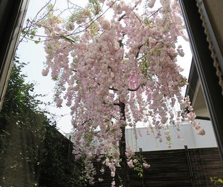 7)窓からは桜