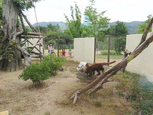 1)レッサーパンダ