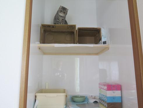 0)ティッシュの箱に上って