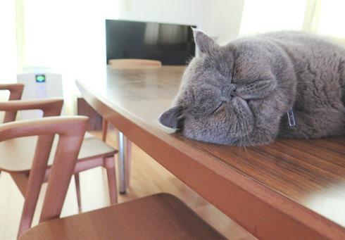 5)しあわせそうな寝顔