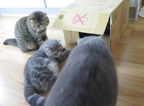 4)マルタくんが!