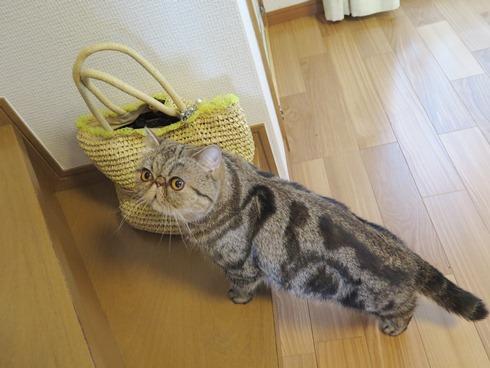 9)隠れてるでぷっ