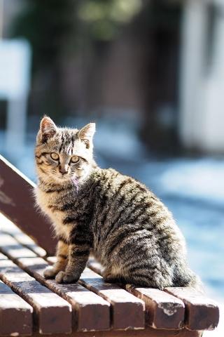 キジトラの仔猫