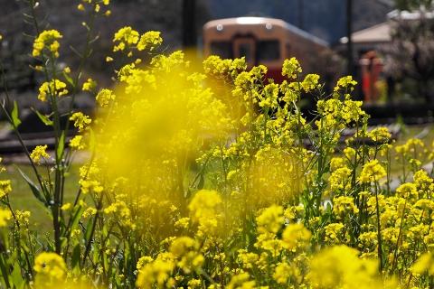 菜の花畑と列車
