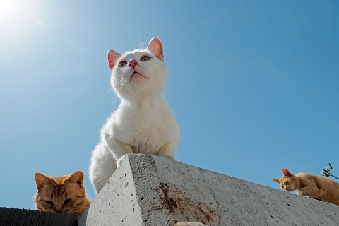 見上げる白猫