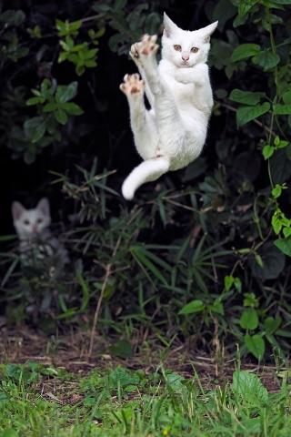 白猫のジャンプ