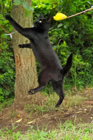 黒猫のジャンプ