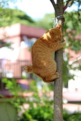 木登りトントン