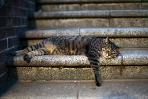 階段で寝ているしまじろう