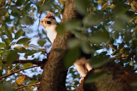 木登りノンちゃん