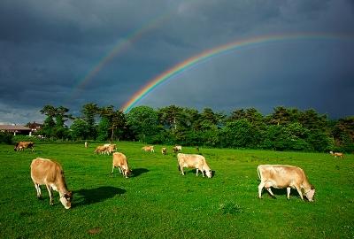 rainbow140613_01.jpg