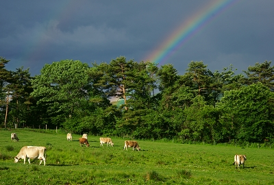 rainbow140613_02.jpg