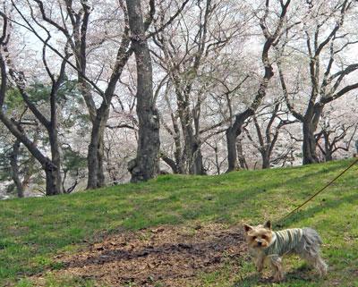 烏帽子山公園2