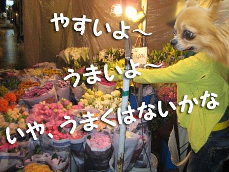 20080905_038.jpg