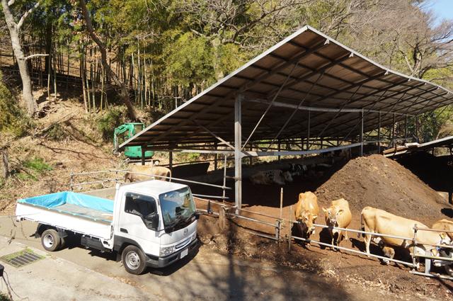 磯沼牧場さんの牛舎