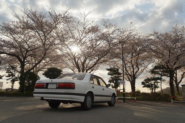 マツダルーチェ HCFC V6ルーチェと府中の桜