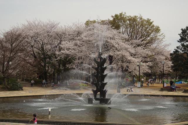 世田谷公園の桜と噴水