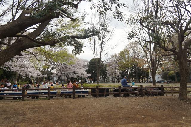 桜の中を走る小さなC57 57