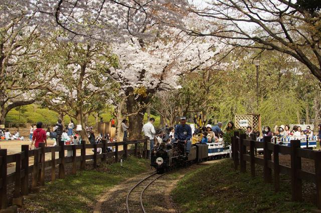 桜の中を走る 世田谷の C57 57