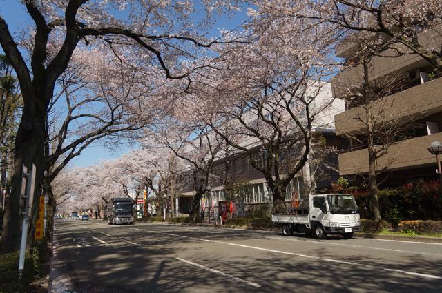 マツダ タイタン ダッシュと国立の桜並木