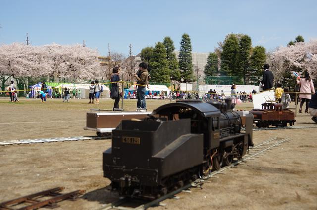 C56 129 と国立の桜