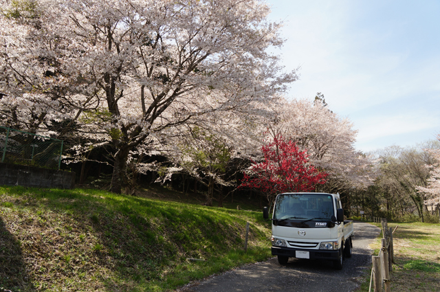 マツダ タイタン と桜
