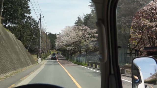 東京の山の中の桜