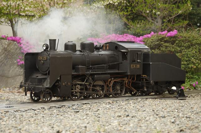 C56 129と満天星躑躅の新緑と芝桜の庭園鉄道